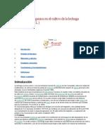 Fertilizacion Organica en El Cultivo de La Lechuga DISEÑO COMPLETO