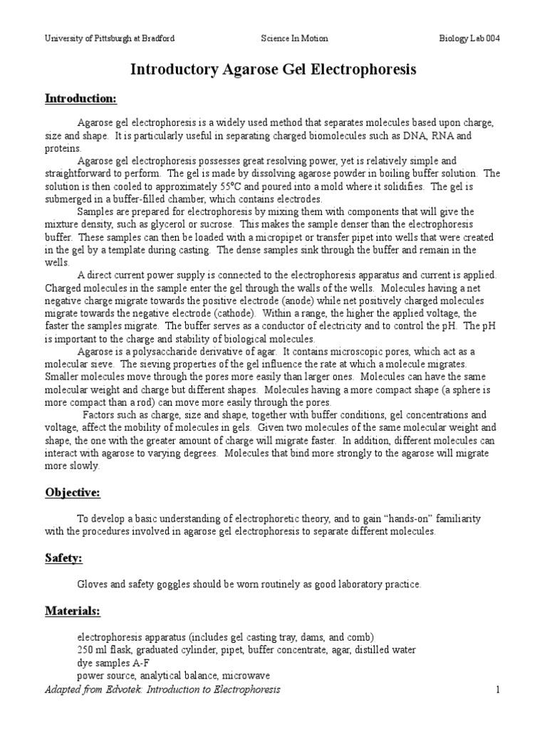 Gel Electrophoresis Practice Worksheet - Worksheet List