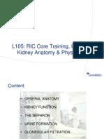 Kidney Anatomy Physiology