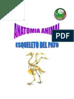 Esqueleto Del Pato