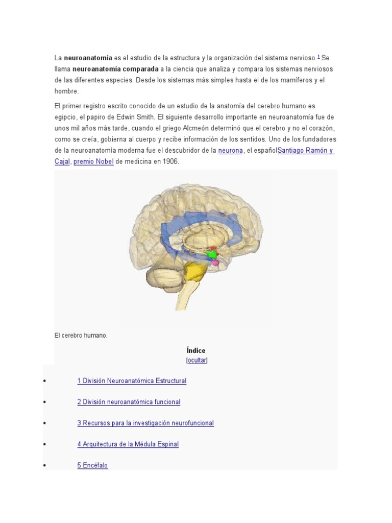 Único Anatomía Funcional Del Cerebelo Componente - Imágenes de ...