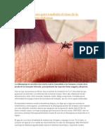 8 Remedios Casero Para Combatir El Virus de La Chikungunya y Sus Síntomas