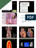 LM-Echocardio-normale1.pdf