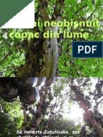 Cel_mai_neobisnuit_copac (1).pps