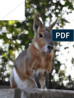 Genetic diversity and population structure of cavy (Cavia porcellus L) in three agro ecological zones of Côte d'Ivoire