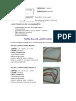 Ascaris Lumbriascaris lumbricoidescoides