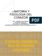 Clase de Anatomia Cardiovascular2015