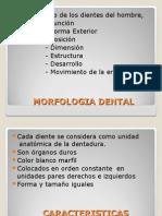 1partesdientedenticiones-120726211811-phpapp02