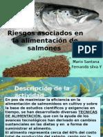Alimentación de Salmones