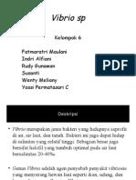 Vibrio Sp Ppt