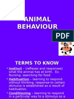 Animal Behavior Pp t
