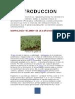 informe de alimentos DEL GARBANZO.docx
