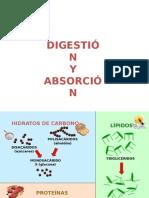 FISIOLOGIA DIGESTIVA  2
