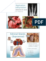 2402 Ch 17 Endocrine system (Part 3) PPT.pdf