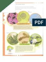 diversidad de seres vivos.pdf
