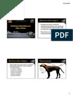 sindromesmedularesemcaesegatos.pdf