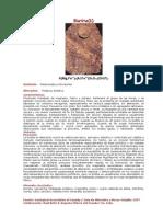 Biotita Secundaria en Porfidos