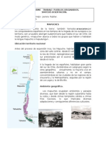 informe MAPUCHES