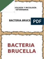 BACTERIA BRUCELLA.pptx