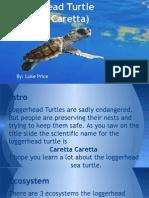 loggerhead turtle presentation