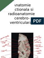Curs radioanatomie an II Sem II Scris