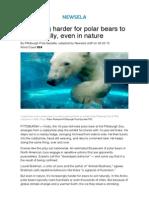 AOTW Polar Bear Medium