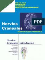 Nervios Craneales I-VI