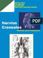 Nervios Craneales VII-XII