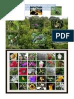 Flora y Fauna de Centroamerica 2015