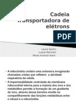 Cadeia Transportadora de Elétrons Apresentação
