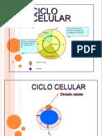 Presentación Ciclo celular.pdf