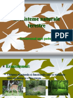 ecosistemenaturaleterestre.ppt
