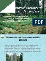 Ecosistemul terestru - Padurea de conifere 2 (1).ppt