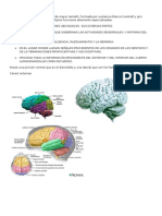 Resumen Neuroanatomia CEREBRO