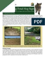 Recognizing Feral Hog Sign