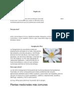 30 plantas medicinales