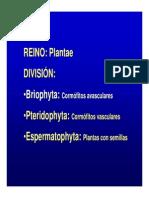 Bot Pteridofitas Gimnospermas