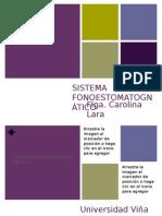 Sistema estomatognatico
