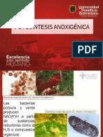 Bioenergetica.fotosìntesis anoxigénica