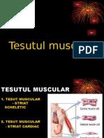Dec 2011 Tesut MuscularII