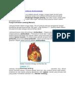Fungsi Jantung Dan Peredaran Darah Manusia