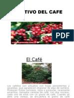El Cultivo Del Cafe (1) Iiiiiiiiiiii