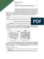 guia 1 endocrino  (1).doc