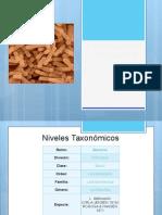 Exposición (Lactobacillus bulgaricus)
