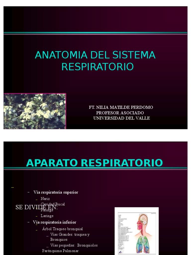 Anatomía del Sistema Respiratorio