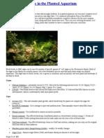Algae in the Planted Aquarium Edited.doc