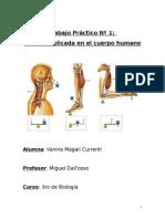 Ejemplos de palancas en el cuerpo humano