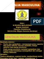 Genitalia Pria