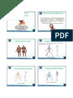 CURSO_CADEIAS_MUSCULARES_EAD_CEFAC-_aula_1.pdf