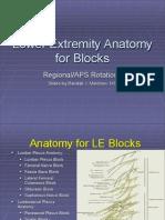 Lower Extremity Anatomy
